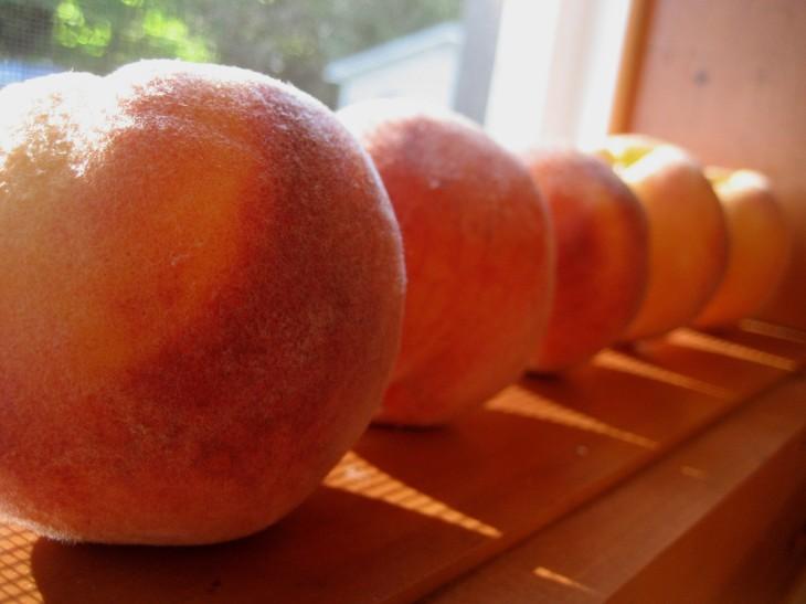 Colorado Peaches | FruitShare.com