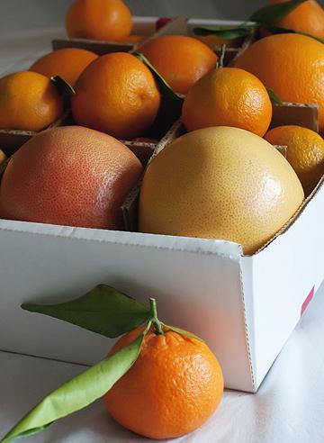 Winter Fruit in Season from FruitShare.com