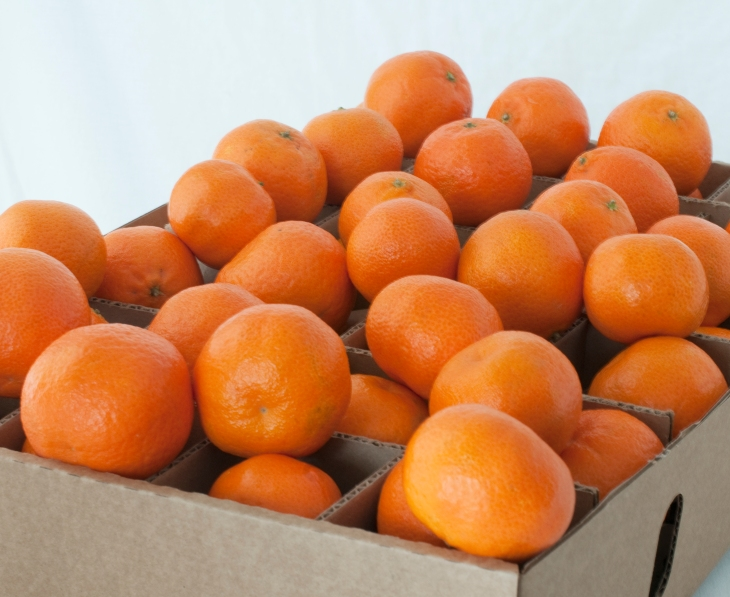 Christmas gift food ideas - organic fruit gifts - clementines